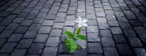 Jasmine-Flower-Breakthrough-1-1200